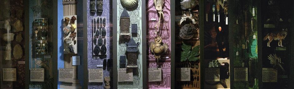 photo of natural history artifacts