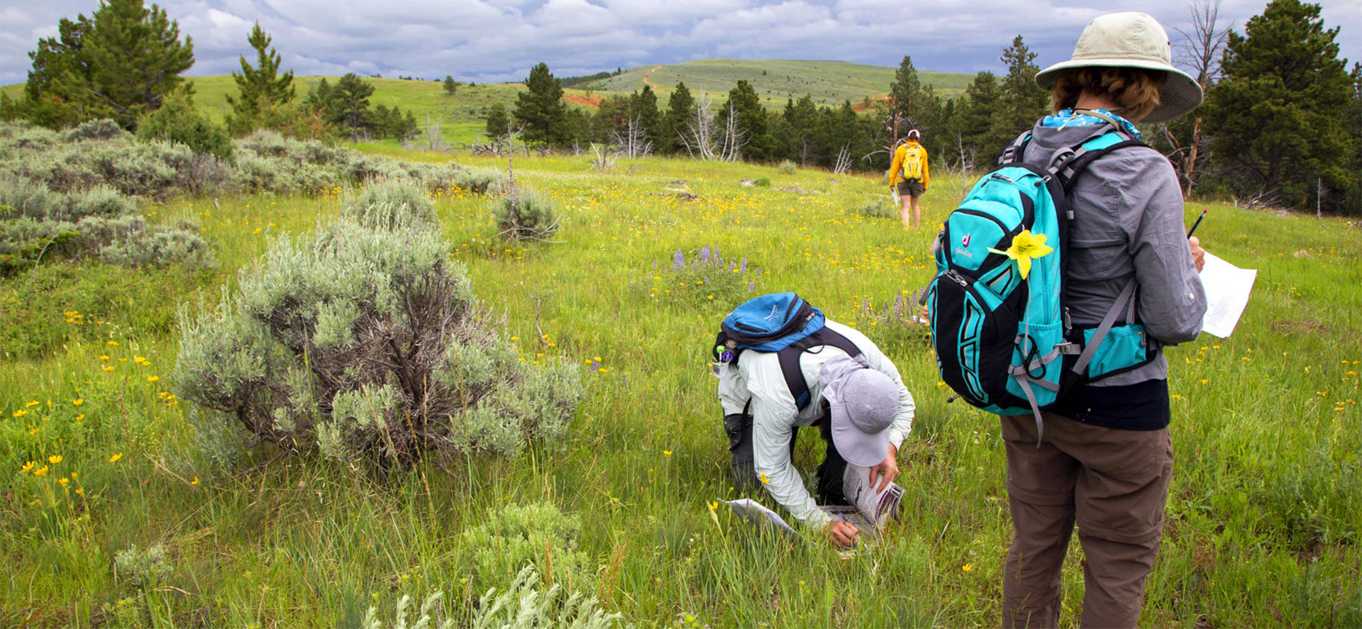 Wyoming BioBlitz